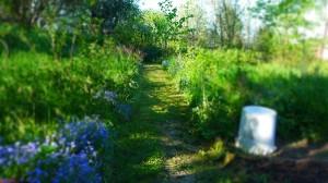 Weg in den verwunschenen Garten