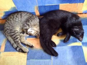 Schlafen im Duett